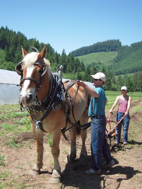 Farmers Walt and Kris give an introduction to working with the horses