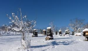 spikenard hives in snow