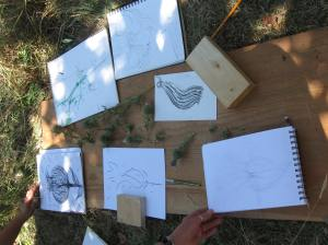Participant drawings from Goethean plant study workshop in Tehkummah - thistle gestures