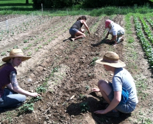 community farm of ann arbor - work in fields