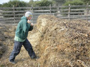 Poking holes in the compost pile at Camphill California to insert the biodynamic preparations (©Ian Dix)